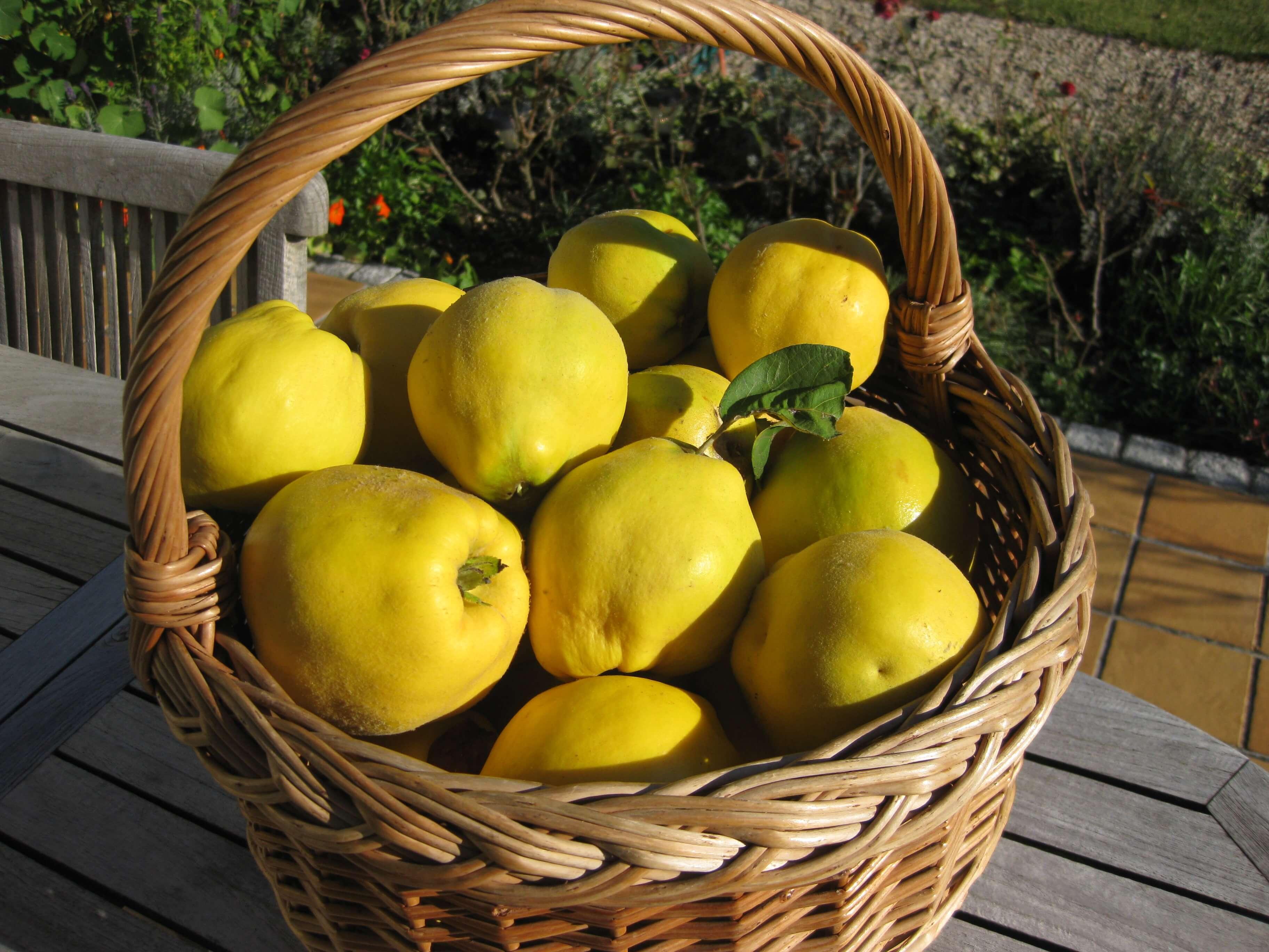 تصویر از خواص درمانی میوه به را بشناسید